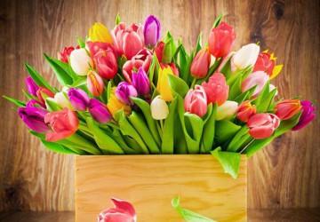 Su kovo 8-ąja, mielosios merginos, panelės, moterys!